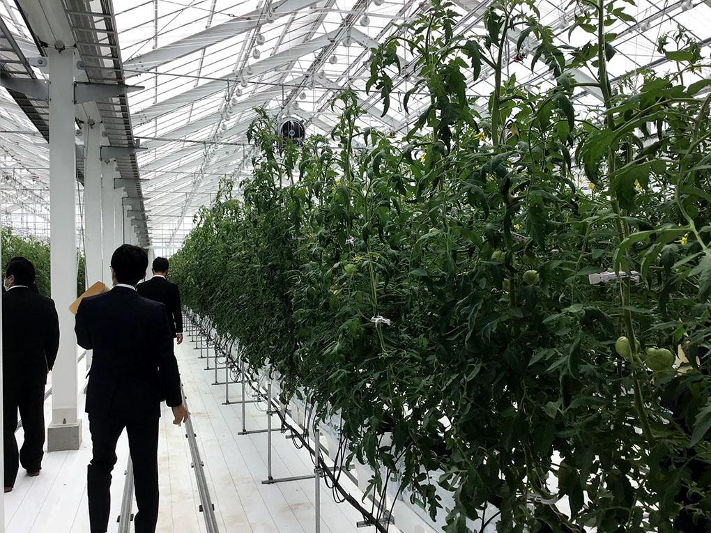 」に委員会視察に行って参りました。 農業大学校は農業の担い手や後継者を養成する機関です。 2年間の修業で全寮制になっています。 昨年、完成したばかりのトマト栽培で「環境制御技術を取り入れたICT温室」を見学させていただきました。  温度・湿度・二酸化炭素濃度の調節をコンピューター管理して、トマト栽培をしていました。 また、隣接されている「愛知県中央家畜保健衛生所」の視察も行いました。  ここでは県内3ヵ所にある家畜保健衛生所等からの病性鑑定材料について細菌学、ウイルス学、病理学及び生化学にわたる総合的な診断を行っています。異常豚の報告がなされた場合、当日には陽性が判明し、翌日には病性の確定ができるというシステムが構築されていました。